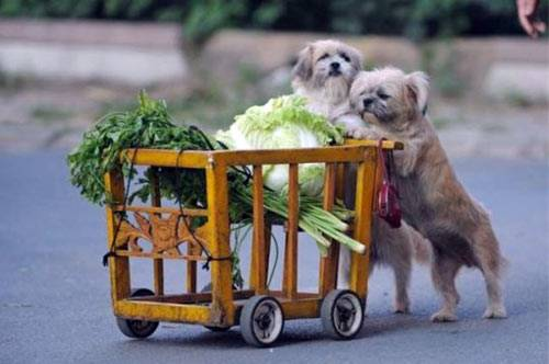 Dogs_and_Vegetables.jpg